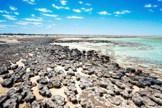 Stromatolites Australia