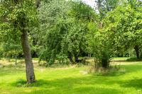 Romantisch angelegte Streuobstwiese, Groß Siemen, Mecklenburg-Vorpommern, Deutschland