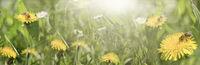 Sonnige Bienenweide - Banner - Panorama