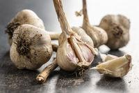 Homegrown white garlic. Bio garlic bulbs.