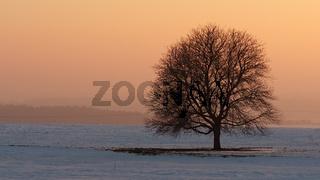 Abendrot mit Baumsolist in Winterlandschaft