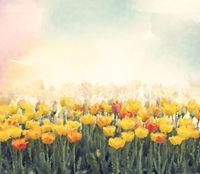 Yellow tulip flowers watercolor.