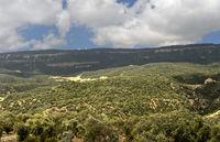 Trockene afromontane Waldlandschaft des Desa'a Waldschutzgebiets. Desa'a national forest reserve