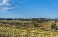 Sunflower plantation in Tuscany