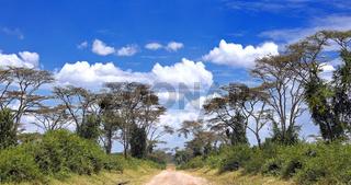 Die bekannte Ishasha Road in Uganda | Famous Ishasha Road in Uganda