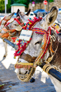 Donkey taxi landmark in Mijas whitewashed spanish village. Lot of donkey taxis waiting for tourists to come and ride them through the village. Costa del Sol, Andalusia, Spain, Europe, close up view