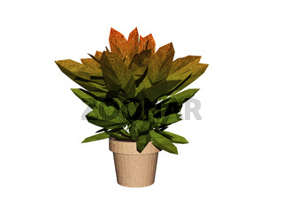 Grünpflanze im Blumentopf