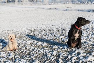 Desinteresse von schwarzem und weißem Hund - Sicherheitsabstand