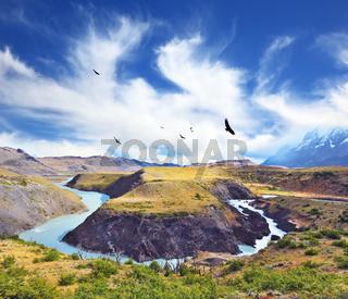 Huge black Andean condors