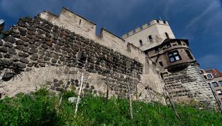 mittelalterlichen Stadtmauer in Köln mit einem kleinen Weinberg