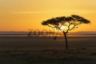 Savannah with acacia tree at sunrise