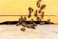 Bienenkasten mit Honigbienen
