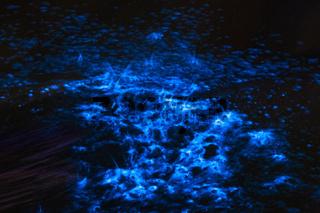 Bioluminescence sea sparkle in ocean tide