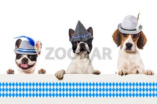 Volksfesthunde
