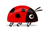 sweet red lady bug