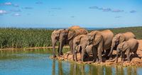Herd of elephants at water hole, South Africa
