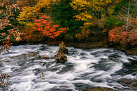 View of Yukawa River flow rapidly passing rocks in colorful foliage of autumn season