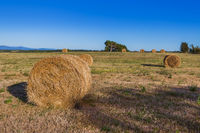 Hay Bales on a field in the Tuscany Italy