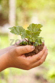 Child hands holding plant new life concept nature living garden copyspace small tree