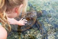 Turtle on Hawaii