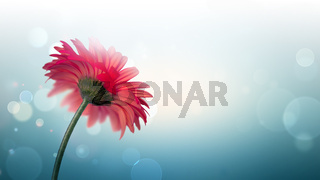 light bokeh background with red flower