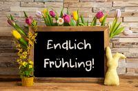 Tulip Flowers, Bunny, Brick Wall, Blackboard, Endlich Fruehling Means Hello Spring