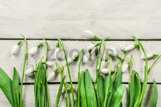 Snowdrop flowers on bright wood