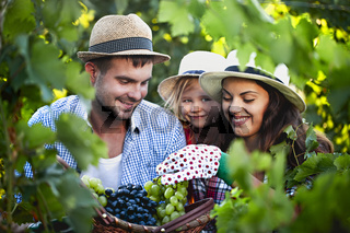 Happy family on grape farm in summer time