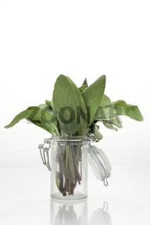 Frischer Salbei in Glasbehältnis vor neutral weißem Hintergrund