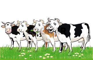 vier Rinder.jpg