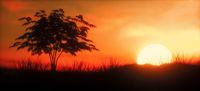 Warm Sunset with tree panoramic
