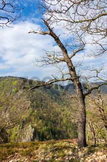 Landschaft mit Baum und Felsen im Harz