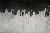 leaf shadows on concrete wall - abstract pattern background