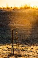 Small tree in winter light on a field