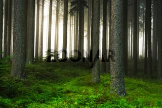 Dunkler Wald im Nebel
