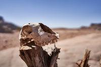Schädel eines Tieres in der Wüste