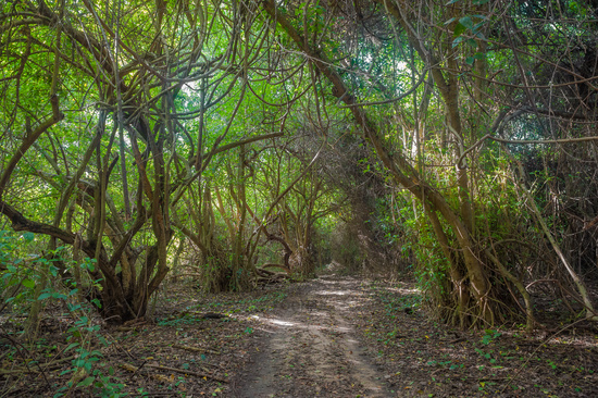 Road in jungle forest