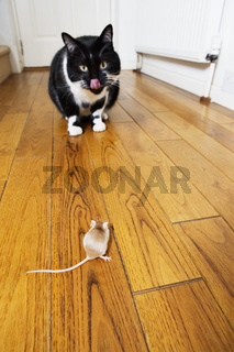 Cat and mouse face to face