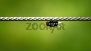 housefly on a wire