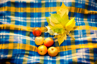 Ripe apples and yellow leaves on blanket in a cage.