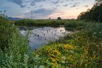 Hiller Moor