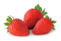 Sweet Strawberries (Fragaria, Rosoideae) isolated on white background, including clipping path without shade.