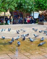 Pigeons flock square Tehran, Iran