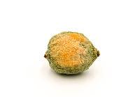 Close-up of half rotten lemon against