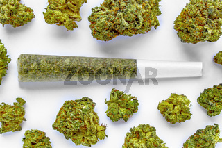 A Pre-Roll Cannabis joint on a white surface with Several cannabis flowers around.