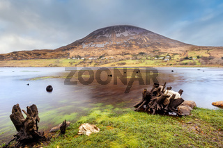 Twisted tree trunks submerged in Dunlewy lake with view at Errigal mountain