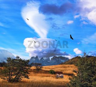 Magic cloud and flocks of condors