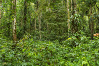 Trekkingtour im Labyrint des Regenwaldes von Ketambe, dem Gunung Leuser Nationalpark auf Sumatra