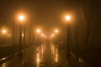 Couple park fog night Kiev