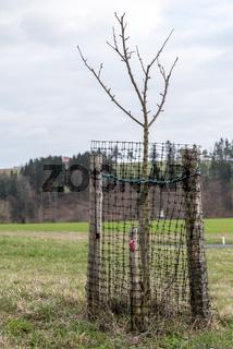 Wildschutz - Umzäunung eines Obstbaumes zum Schutz